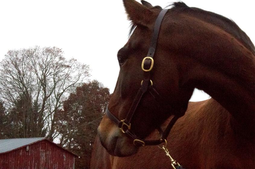 MustangOtherWorldFB2